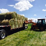 Round Bales Loaded